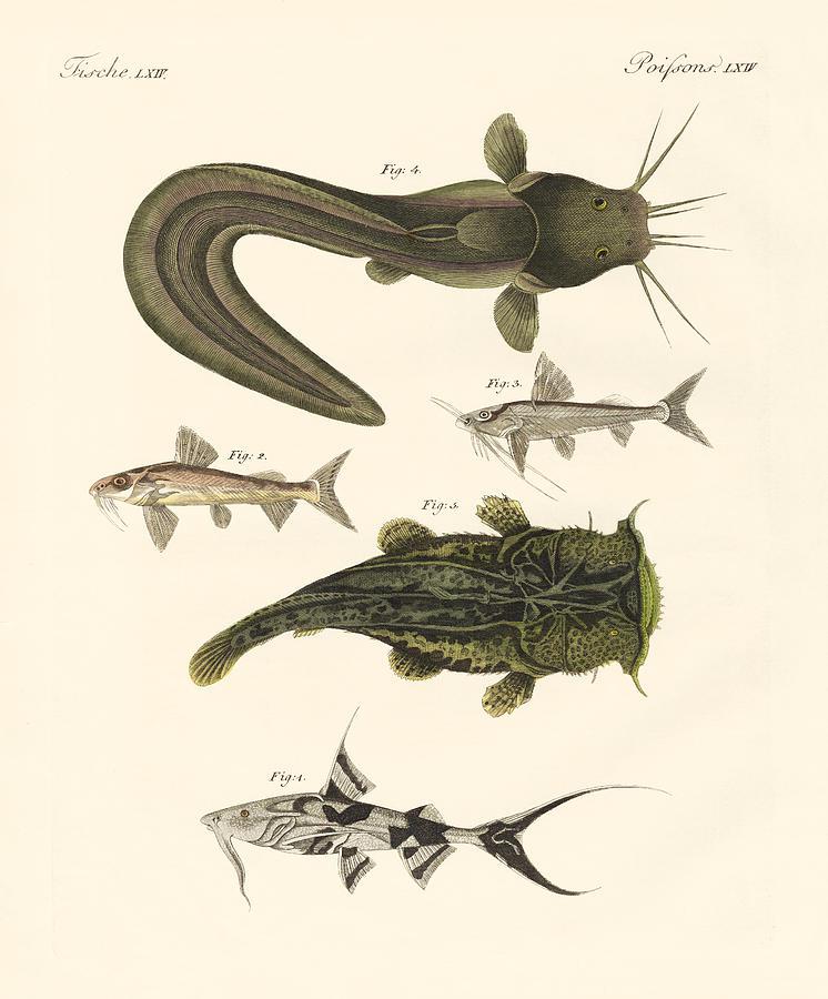 746x900 Fish From Bengali Drawing By Splendid Art Prints
