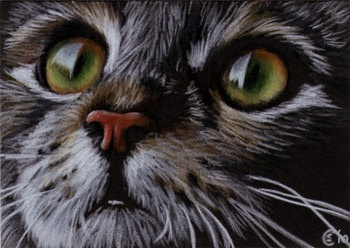 350x248 164 Best Drawing Cats Amp Kittens Images On Cute Kittens