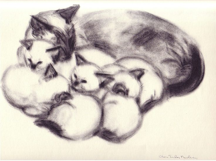 736x549 29 Best Cat And Kitten Drawings Images On Cute Kittens