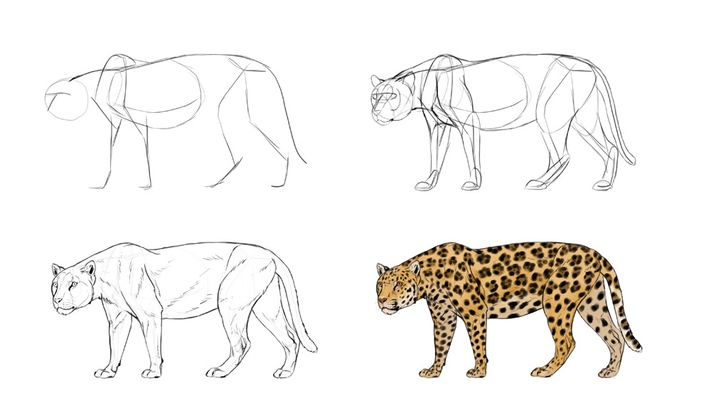1000x574 How To Draw Big Cats Lions, Tigers, Cheetahs, And Much More