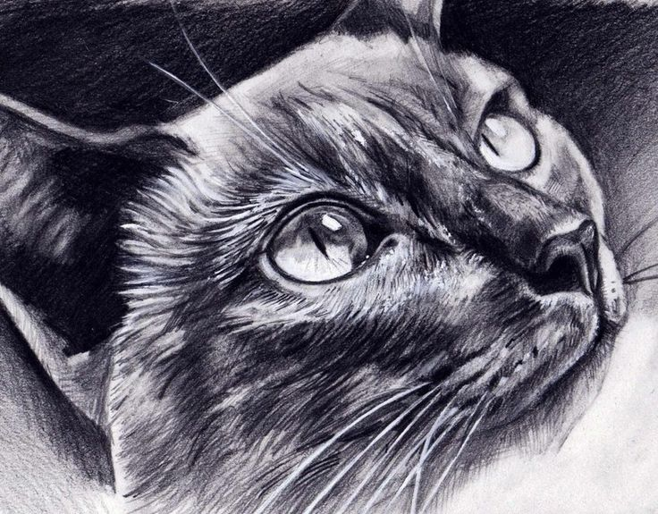 736x575 9 Best Cat Eyes Images On Drawing Techniques, Cat
