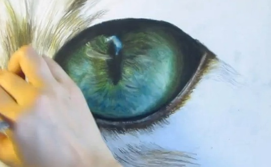 536x331 Cat Eye Speed Drawing Life With Cats