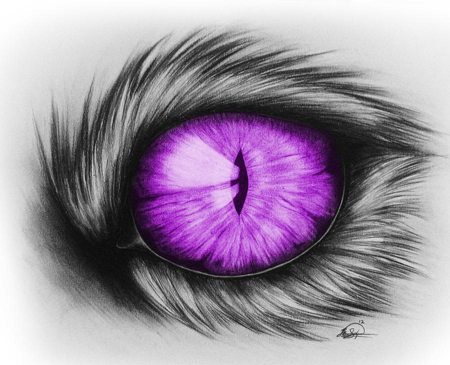 900x730 Cool Domestic Cats House Cat Eye Drawing Drawing By Brittany
