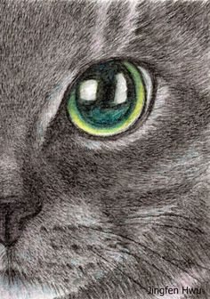 236x336 How To Draw Cat Eyes That Look Real Human Eye Drawing, Human Eye