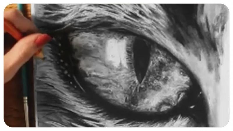 800x450 Siamese How To Draw A Cat Eye