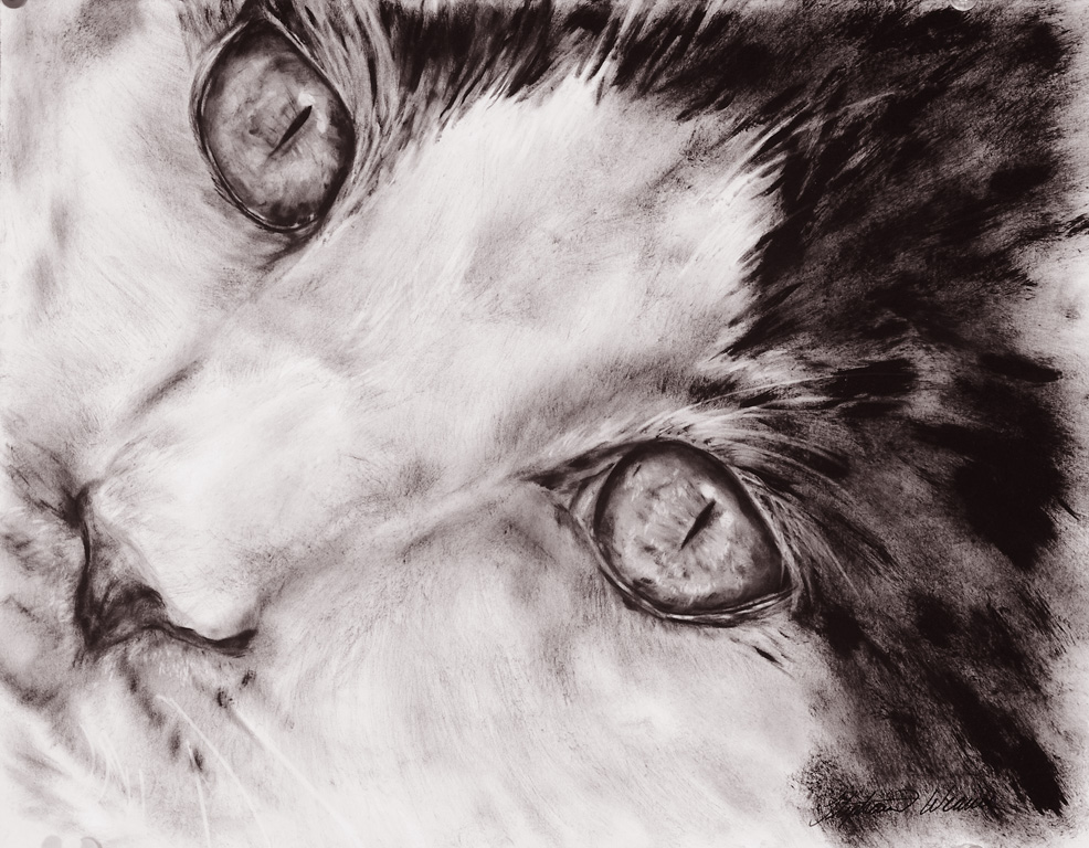 986x768 Close Up Of Cat 11 X 14 Dry Brush Oil Painting Artist