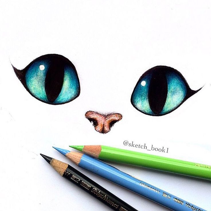 736x736 Pictures Cute Cat Eyes Drawings,