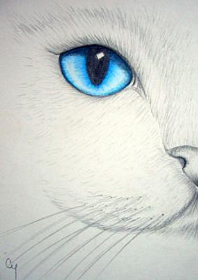 283x400 White Cat