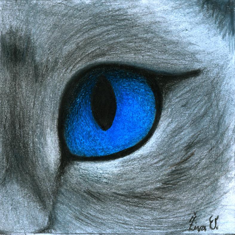 787x786 Siamese Cat Eye By Zivazivc21