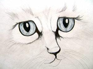300x224 Cat Face Drawings