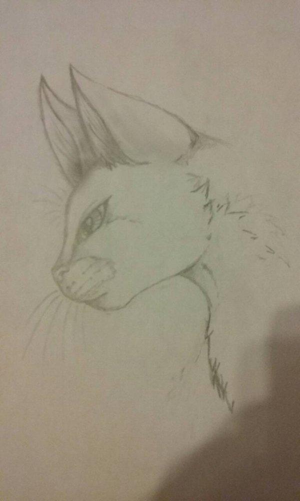 600x1000 Warrior Cats Drawing Warrior Cat Face By Jetpackkitteh23