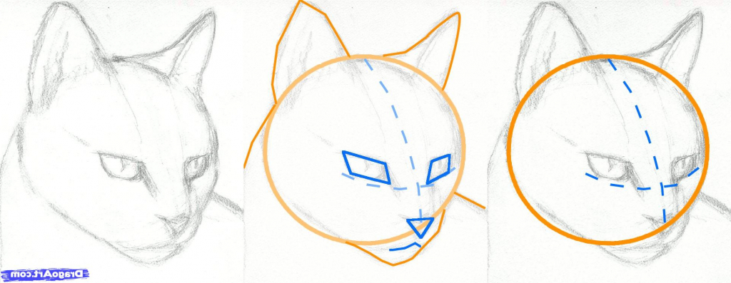 1024x397 Realistic Cat Drawing