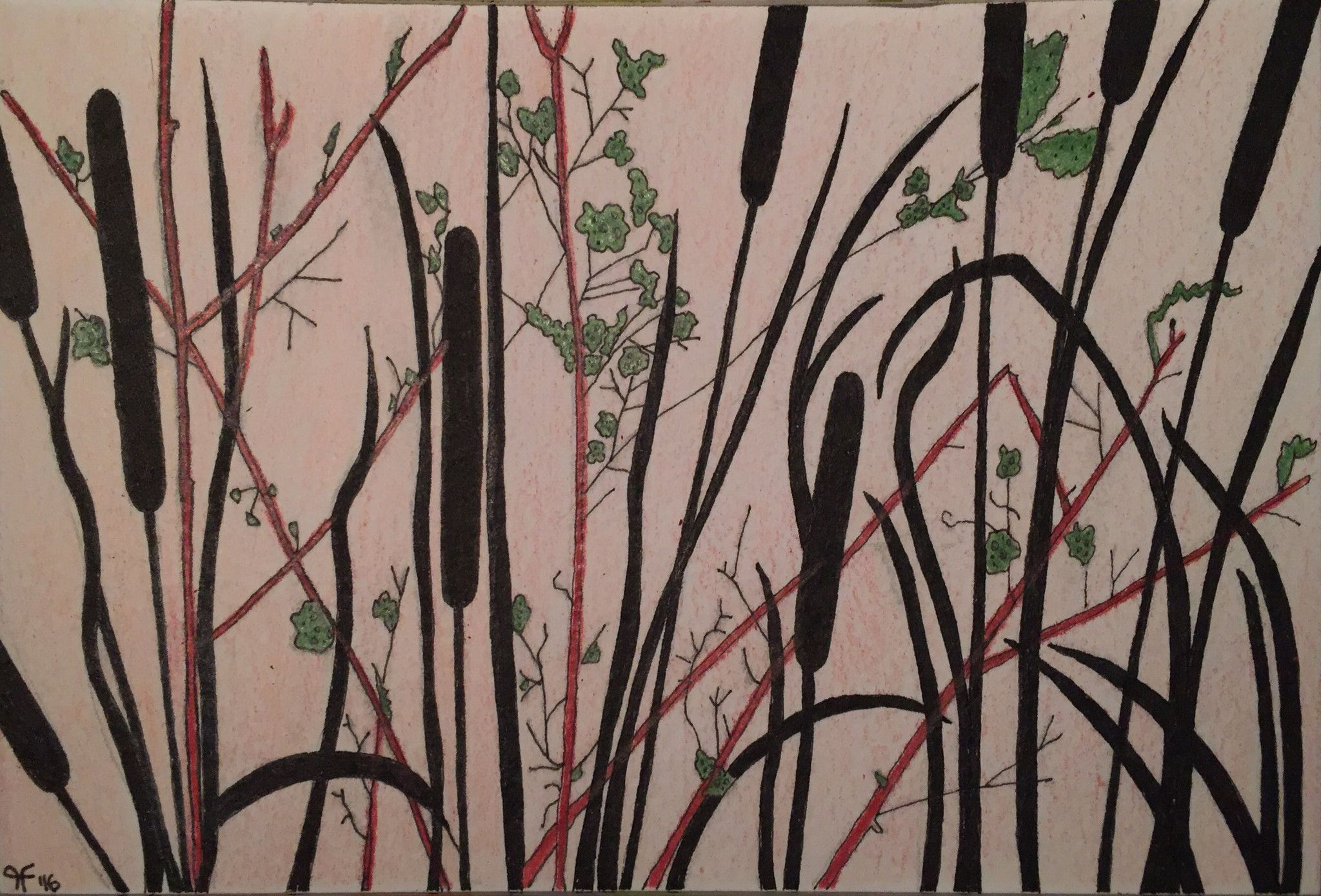 Cattails Drawing At Getdrawingscom Free For Personal Use Cattails