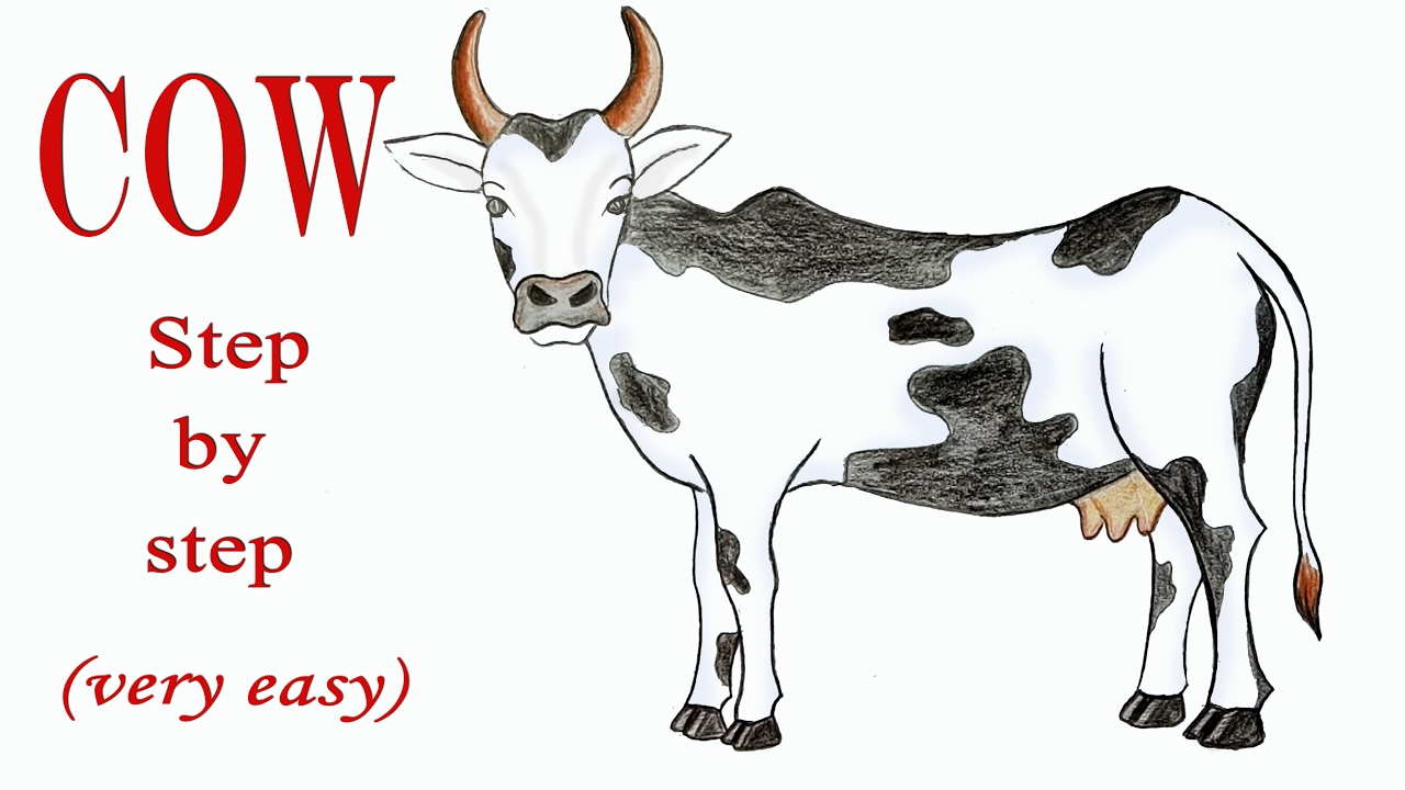 1280x720 How To Draw A Cow Step By Step (Very Easy)