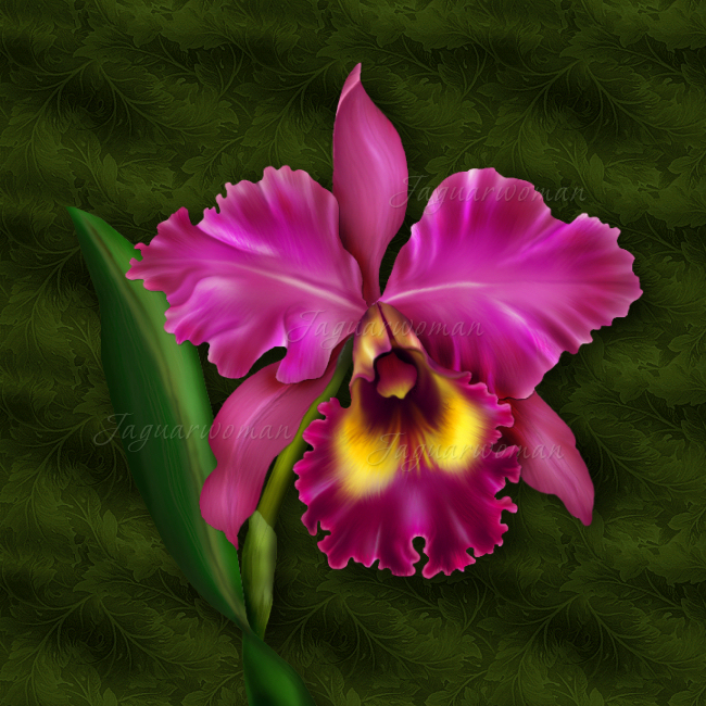 Cattleya orchid drawing at getdrawings free for personal use 650x650 jaguarwoman39s luscious cattleya orchid i jaguarwoman rare mightylinksfo