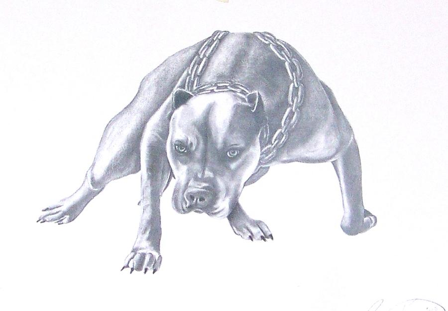 900x625 Pitt Bull With Chains Drawing By Rebecca Bellomo