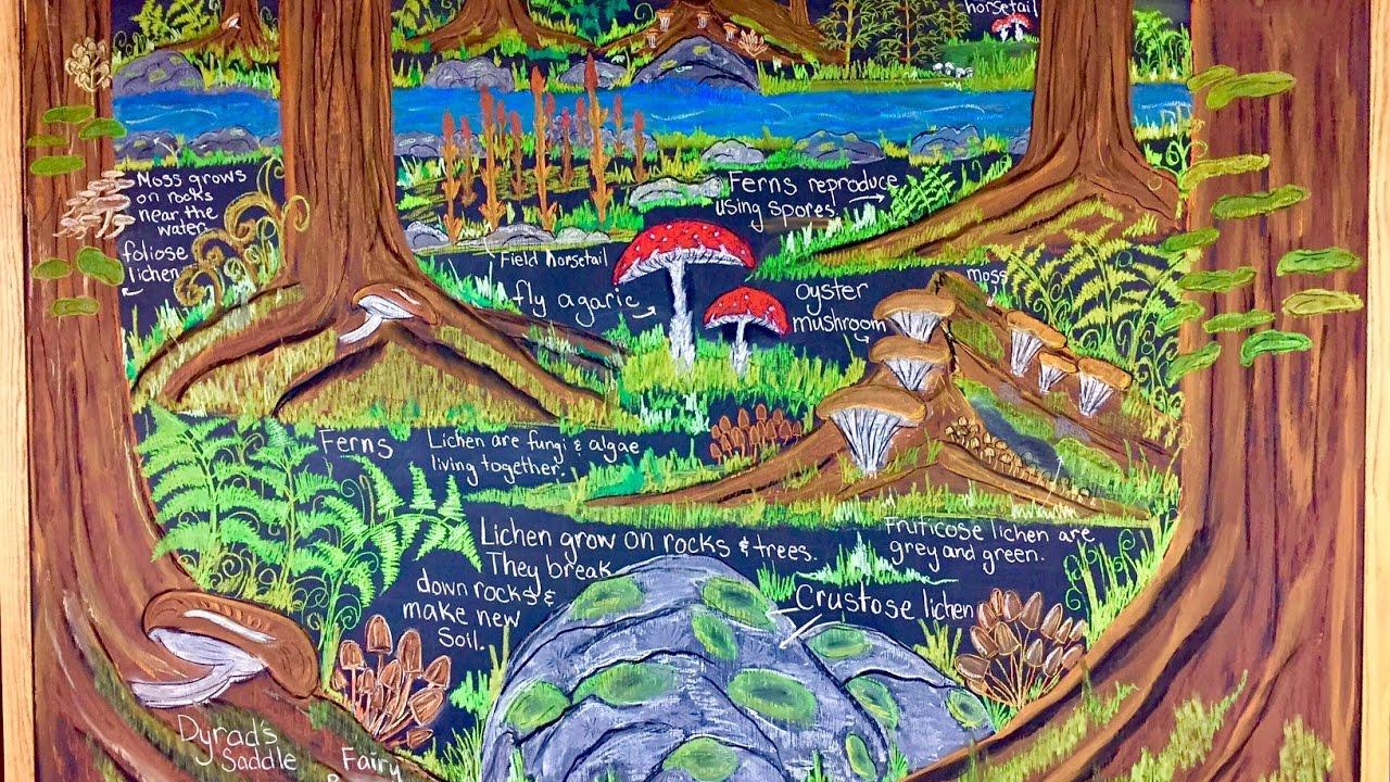 1280x720 Chalk Drawing Waldorf Main Lesson Botany