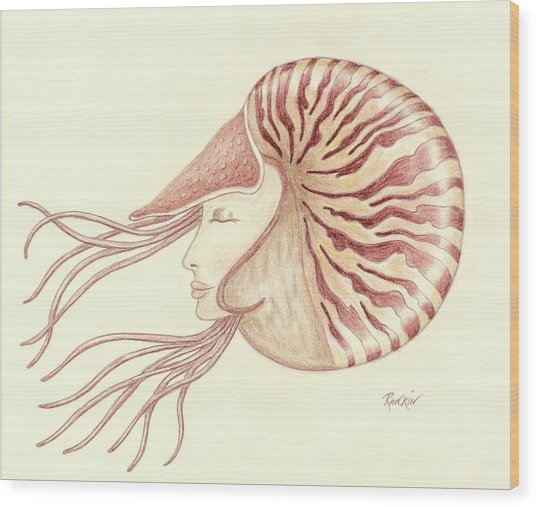 536x507 Chambered Nautilus Drawing By K S Rankin