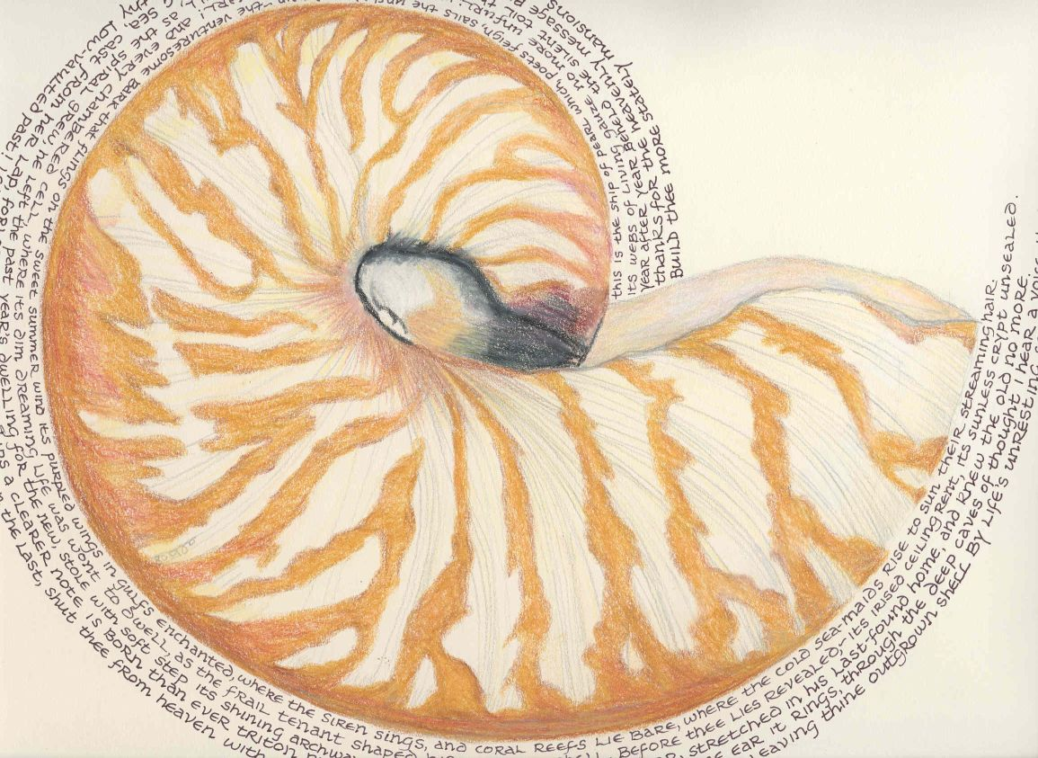 1155x843 The Chambered Nautilus Drawing Conclusions