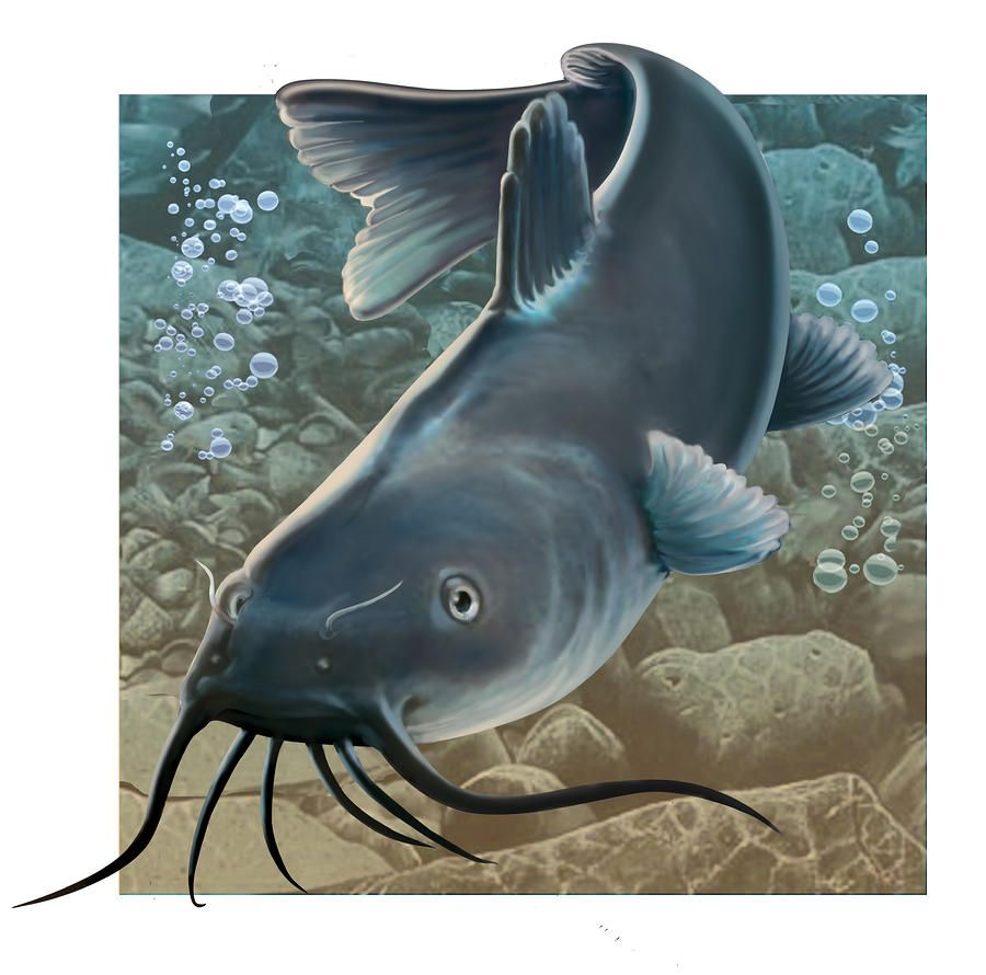 Chinese Catfish Art