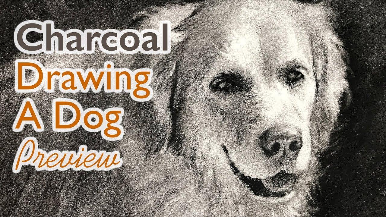 1280x720 Animal Drawing