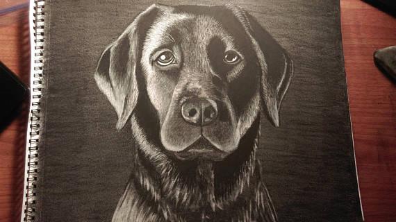 570x320 Custom Charcoal Animal Drawing