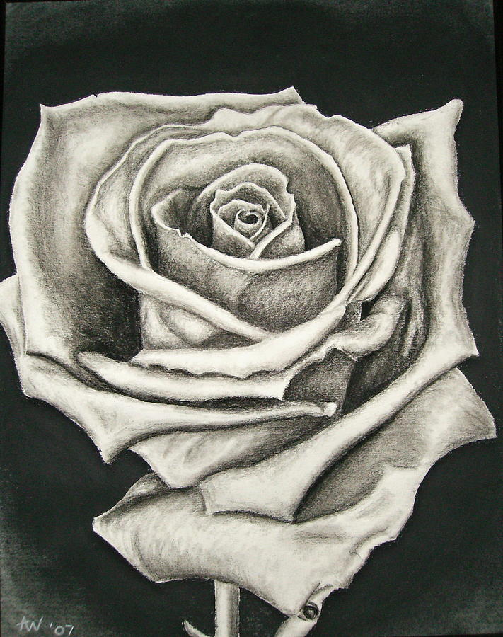 It's just a photo of Unforgettable Charcoal Rose Drawing