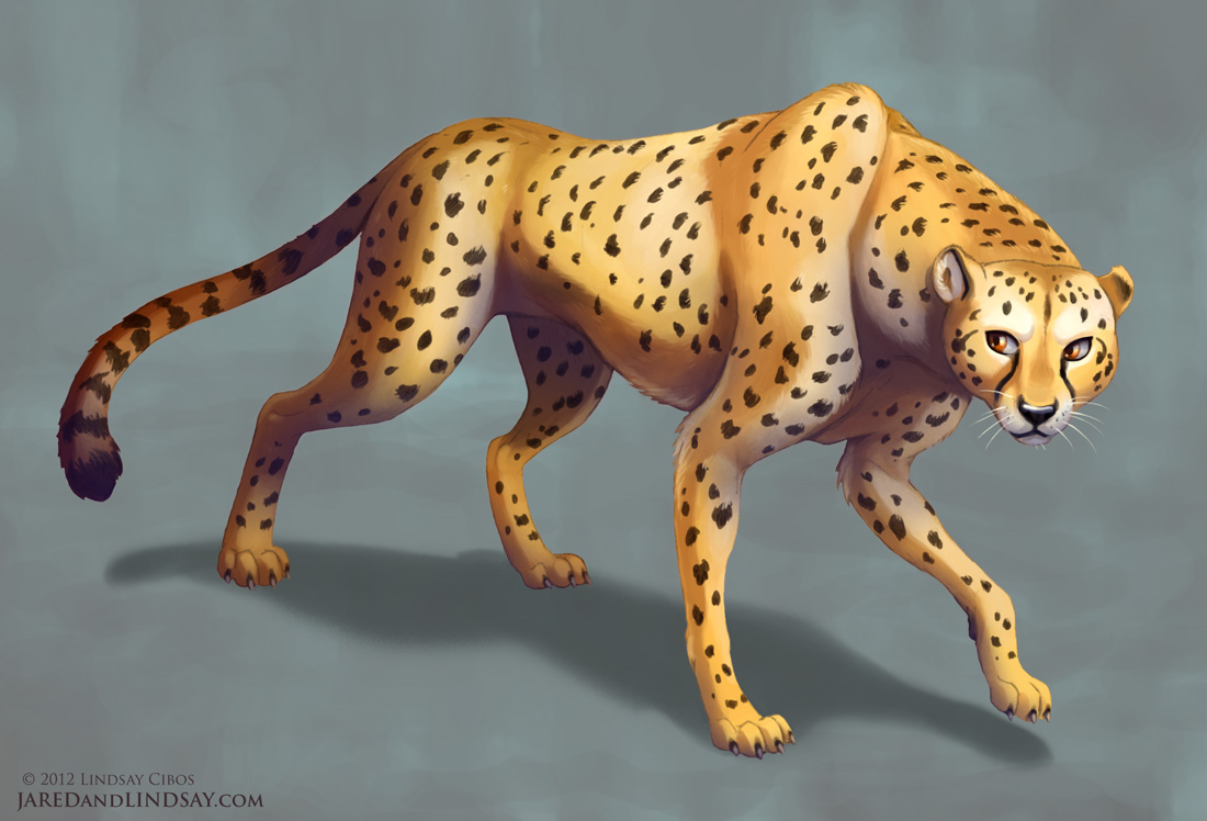 1100x748 Lindsay Cibos' Art Blog How To Draw A Cheetah