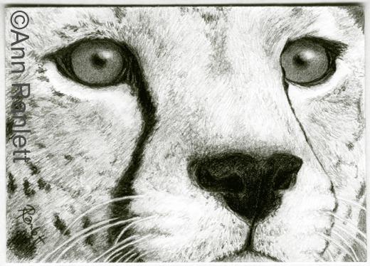 Cheetah Face Drawing at GetDrawings | Free download