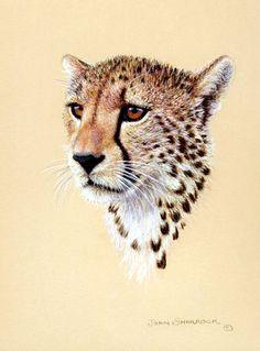 236x319 Cheetah Art Photograph