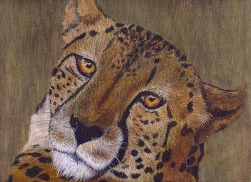 500x363 Cheetah Face Completed