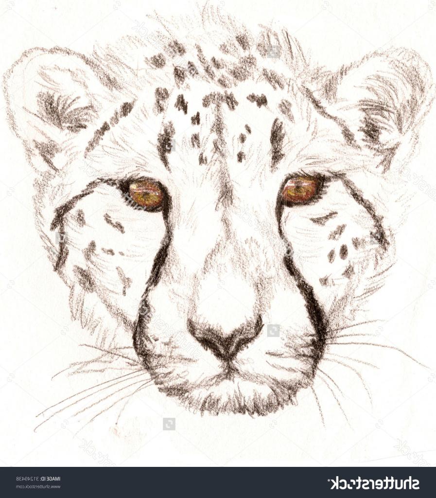 897x1024 Cheetah Face Pencil Drawing Cheetah Face Sketch Cheetah Pencil
