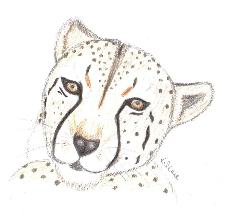 900x858 Cheetah Face By Xvalliex