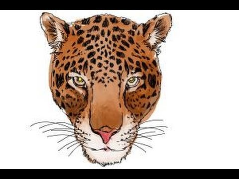 480x360 How To Draw A Cheetah Face