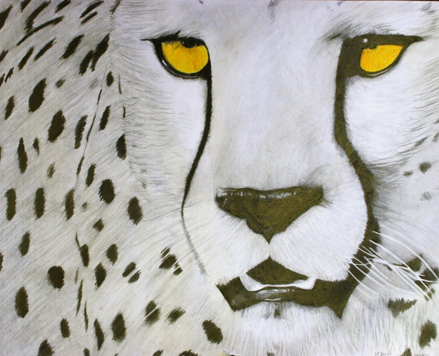 900x729 Cheetah Drawings Cheetah Drawing By ~allandavisart
