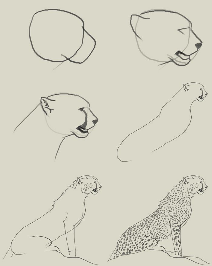 700x878 Draw A Cheetah Sitting