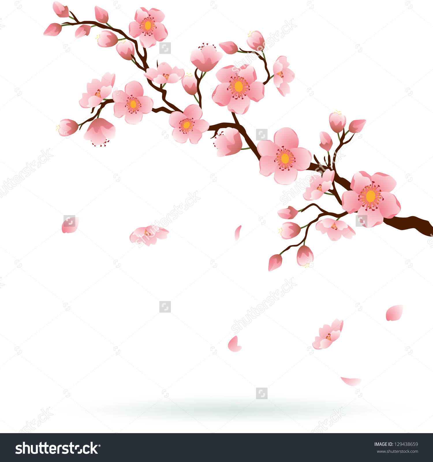 Sakura branch: what is, how to do massage, features of the procedure 64