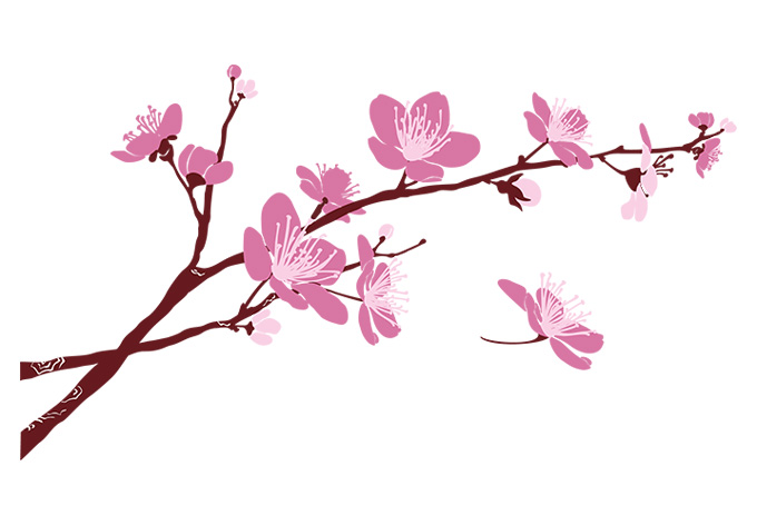 680x472 Cherry Blossom Branch Cherry Blossom Branch 02 Wall Decal