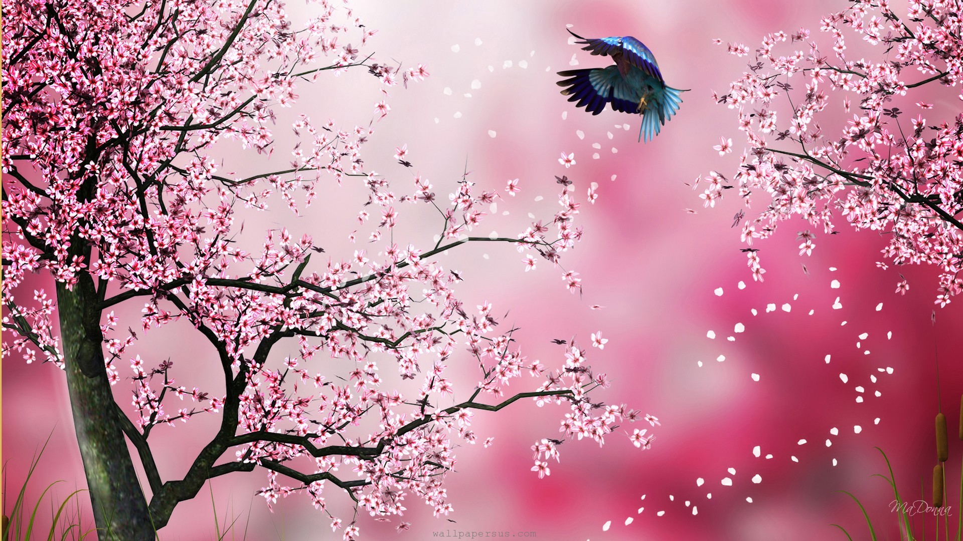 Cherry Blossom Drawing Wallpaper At Getdrawings Free Download