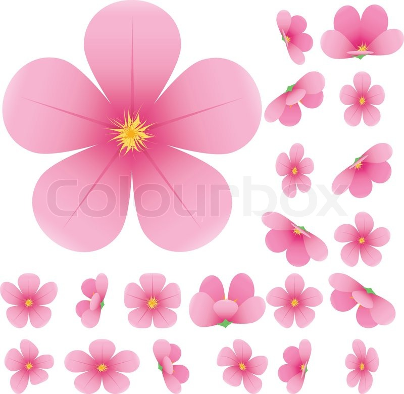 800x780 Cherry Blossom, Flowers Of Sakura, Set, Pink, Flowers Collection