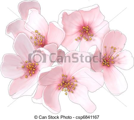 450x403 Cherry Blossom Flowers Stock Illustrations