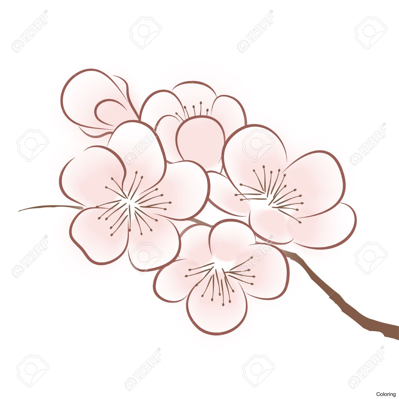 cherry blossom flower drawing at getdrawings com free for personal