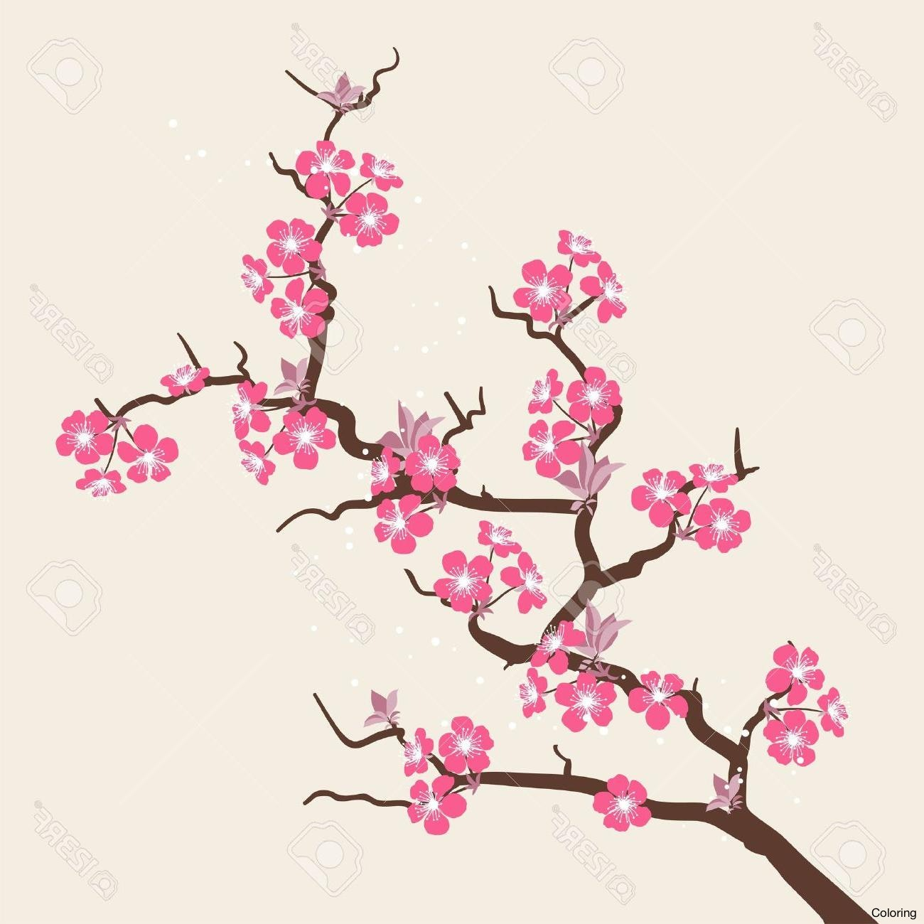 cherry blossom flowers drawing at getdrawings com free for
