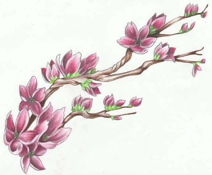 728x603 Anese Cherry Blossom Tattoo Designs