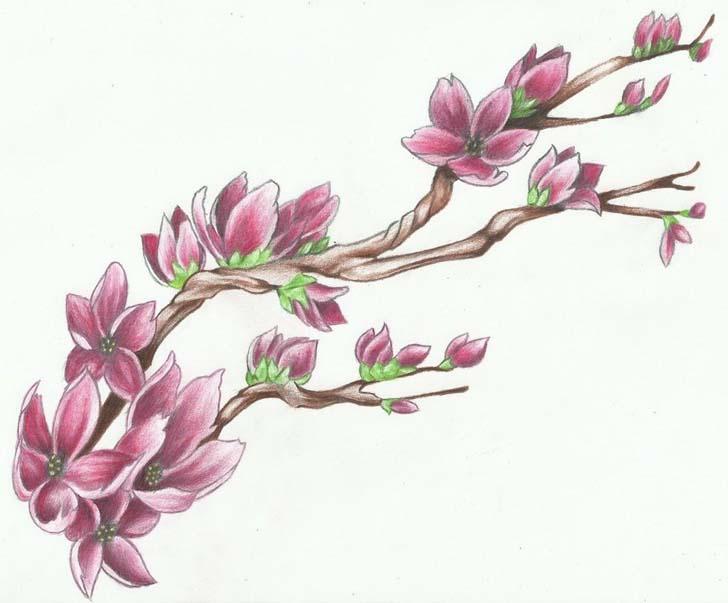 728x603 Japanese Cherry Blossom Tattoo Designs Tattoo Designs Tattoo