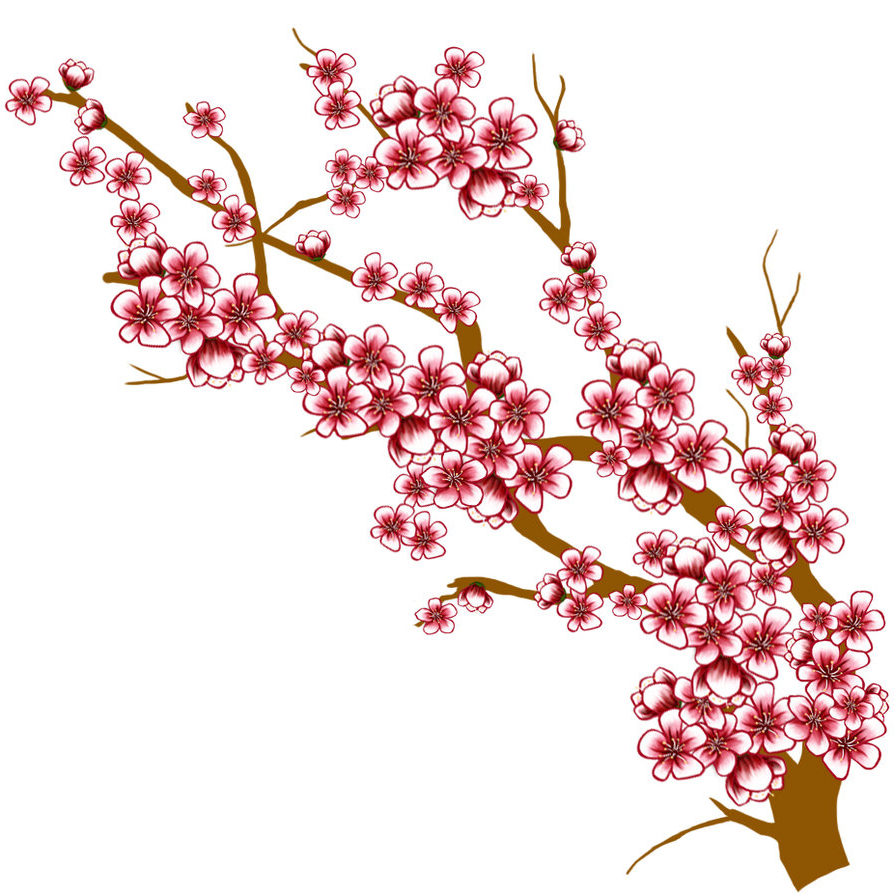 894x894 Cherry Blossom Flower Branch Drawing Cherry Blossom Tree Branch