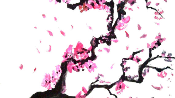 570x320 Cherry Blossom Tree Drawing Would Like Cherry Blossoms Done