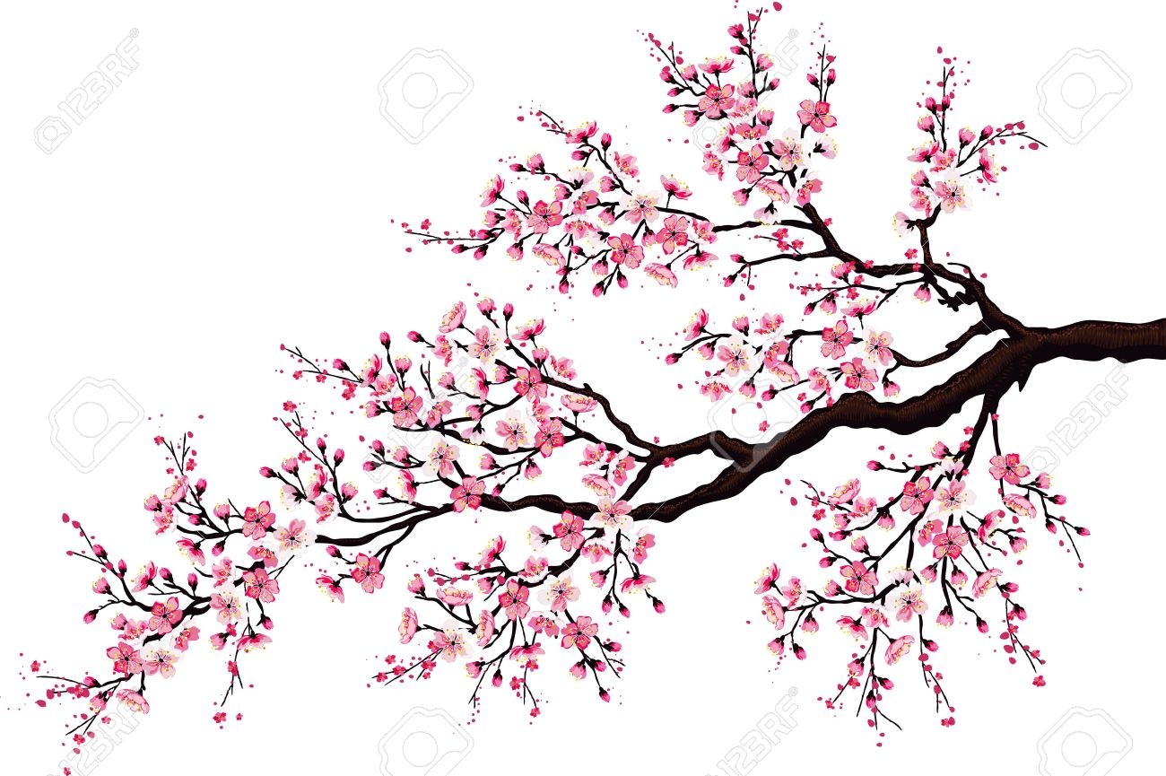 1300x865 Cherry Tree Stock Photos. Royalty Free Business Images