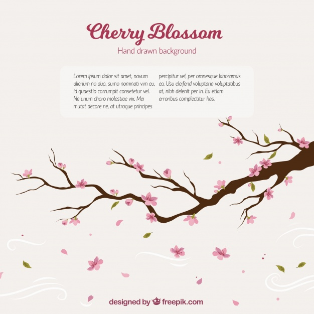 626x626 Cherry Tree Branch Background Vector Free Download