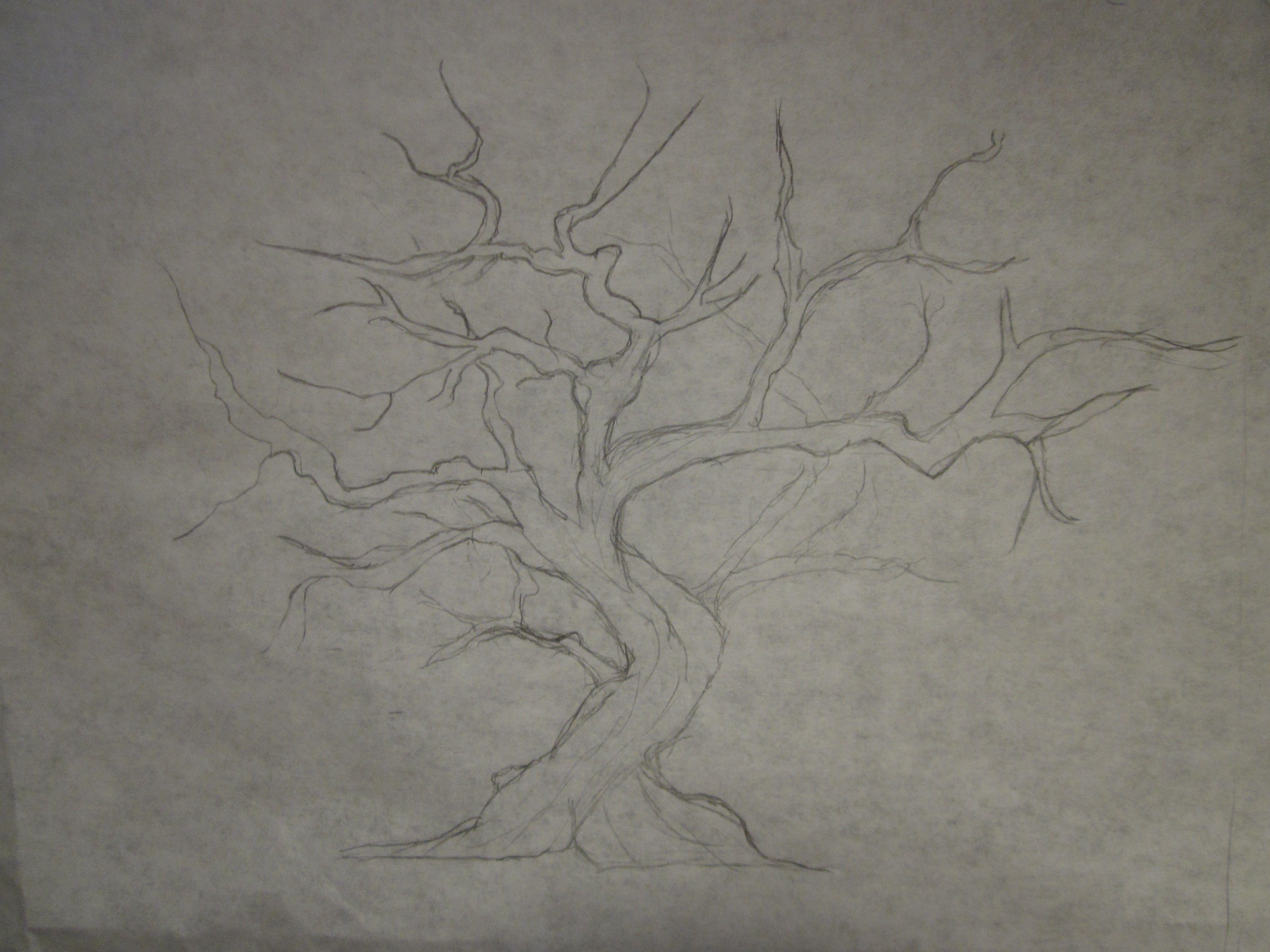 4000x3000 Cherry Blossom Tree Drawing